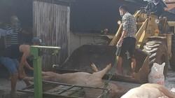 Lâm Đồng: 40 tỷ đồng hỗ trợ dân tiêu hủy lợn mắc dịch tả châu Phi