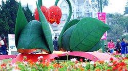 Festival Hoa Đà Lạt 2019: Nhà nhà trồng hoa đãi du khách thưởng lãm