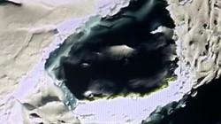 Lộ diện hộp sọ của người khổng lồ ở Nam Cực lạnh giá?