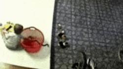 Hoảng hồn bé trai thò tay vào giỏ đồ chơi bắt được con rắn, nhặt lên đùa giỡn