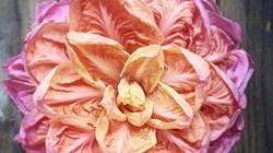 Rau diếp hồng khác gì rau diếp xanh mà giá cao gấp 20 lần?