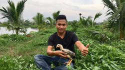 Hải Phòng: Trai phố Thiên Lôi ra đồng nuôi gà chọi, cá Koi, chó Phú Quốc