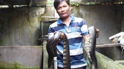 Bạc Liêu: Nuôi những con rắn bự, cầm nặng cả tay, kiếm bộn tiền