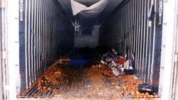 """58 thi thể chồng chất trong container và hành trình kinh hoàng đến Anh """"đổi đời"""""""