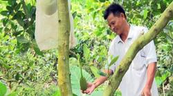 Tiền Giang: Cho mít Thái ở chung với ổi lê Đài Loan, tiền gấp đôi
