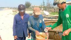 """Bình Thuận: Mùa """"lộc biển"""" dân đi bắt con gì mà kiếm 5-7 triệu/ngày?"""