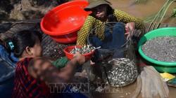 Mùa nước nổi người dân Đồng Tháp nhử cá đồng bằng cách nào?