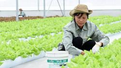 Tích tụ đất nông nghiệp: Cơ hội giàu lên trên ruộng đất phì nhiêu