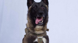 Số phận chú chó anh hùng dồn thủ lĩnh tối cao IS vào đường cùng