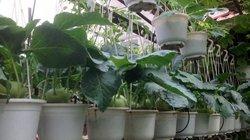 Tháng 11 gõ cửa, người nông dân sân thượng nên bắt tay trồng những loại rau này