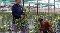 Vùng đất trồng loài hoa cho nhiều màu lạ dân khấm khá