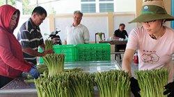10 năm nông thôn mới Ninh Thuận: Điểm sáng ở Ninh Phước