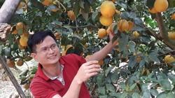 Làm được việc này, người trồng cam không lo ế mà vẫn thu tiền tỷ