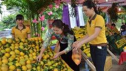 Hòa Bình: Sẵn sàng cho Lễ hội cây ăn quả có múi 2019