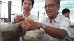 """""""Đột nhập"""" trại nấm mối-loài nấm kỳ lạ của U70 đất Tây Ninh"""