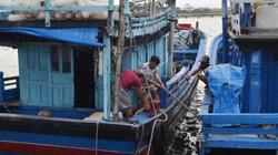 Bão số 5 tiến thẳng Nam Trung Bộ, 2 tàu gặp nạn, gọi 557 tàu vào bờ