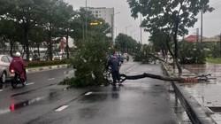 Đà Nẵng: Cây đổ la liệt, phụ huynh học sinh bị gió quật ngã ra đường