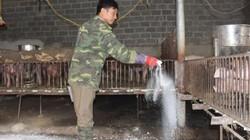 Tổ chức tháng tiêu độc khử trùng, dập tắt dịch tả lợn châu Phi
