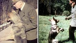 Vì sao Hitler, Napoleon, Alexander đại đế đều sợ… mèo?
