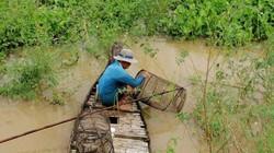 Mùa lũ ở An Giang theo chân người đi đặt lọp tôm ở đồng nước nổi