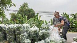 Bỏ lúa đất cốt cao trồng dưa chuột, 1 tháng hái quả đã có 30 triệu