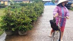 Bình Định: Sợ lũ, dân thủ phủ mai vàng miền Trung  ôm cây... chạy!