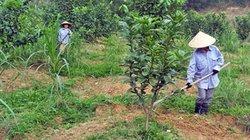 Liên kết, hỗ trợ vốn  và kỹ thuật cho nông dân