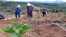 Hải quan Quảng Trị trả thiếu đất: UBND tỉnh yêu cầu bàn giao