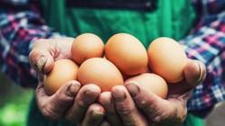 Hai người bạn thách nhau ăn 50 quả trứng, kết cục một người bỏ mạng
