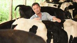Cô Gái Hà Lan: Câu chuyện về 20 phút vàng bảo quản sữa không nhiễm khuẩn