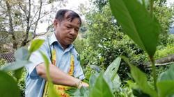 Lạng Sơn: Vốn vay về bản, đồi rừng bạt ngàn, trâu bò đầy chuồng