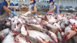 Mỹ làm điều chưa từng có, cá tra Việt rộng cửa xuất khẩu