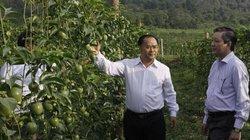 Phó Chủ tịch Hội NDVN: Có hợp tác, liên kết nông dân mới khá, giàu