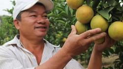 Ở nơi hẻo lánh trồng bưởi, trồng cam, quả sai phát hờn