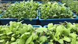 Làm nông trên... nóc nhà, mẹ đảm Hải Dương bội thu rau xanh cả 4 mùa
