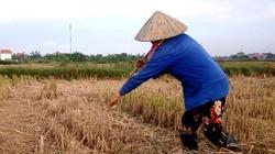 Clip: Khi nông dân khước từ đồng ruộng