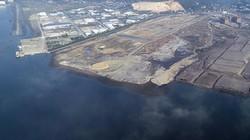 Rừng ngập mặn vịnh Cửa Lục bị hàng chục dự án đô thị lấn biển uy hiếp
