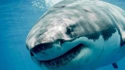 Phát hiện bàn tay của khách mất tích trong bụng cá mập