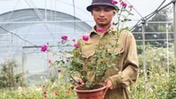 Bỏ việc Hà Nội, trai 8X về quê trồng hoa hồng thu 300 triệu mỗi năm