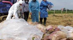 Khai khống lợn bị tiêu hủy do dịch tả lợn châu Phi, sẽ xử lý nghiêm