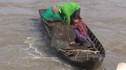 Đồng Tháp: Mùa cá ra sông, dân hứng cống bắt 250 ký cá mỗi ngày