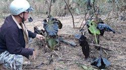Quảng Trị: Tìm ra nơi phát tán dầu thải độc hại ra sông Hiếu