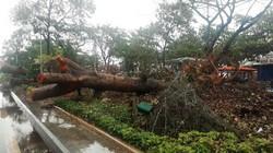 Bão số 6: Quy Nhơn gió to, mưa lớn, 1.200 du khách ở lại đón bão