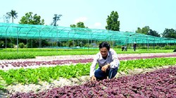 Quảng Nam: Cả làng trồng rau, cả nhà làm giàu cũng từ rau