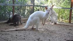 Tiết lộ thú vị về đàn chuột túi xuất hiện ở Hà Nội