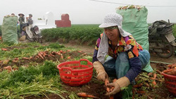 """""""Cầu nối"""" giúp nông dân mua phân bón tốt, 6 tháng mới phải trả tiền"""