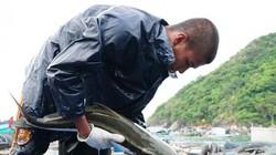 Dân ở đây giàu nhờ ra đảo Hòn Chuối làm lồng khổng lồ nuôi cá to