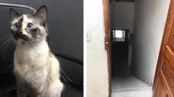Clip: Mèo lao như bay cứu bé thoát khỏi nguy hiểm gây bất ngờ