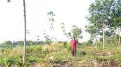 Nhiều tréo ngoe trong quy hoạch sử dụng đất ở Bình Phước