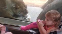 Điếc thì không sợ súng còn trẻ em thì không sợ... sư tử